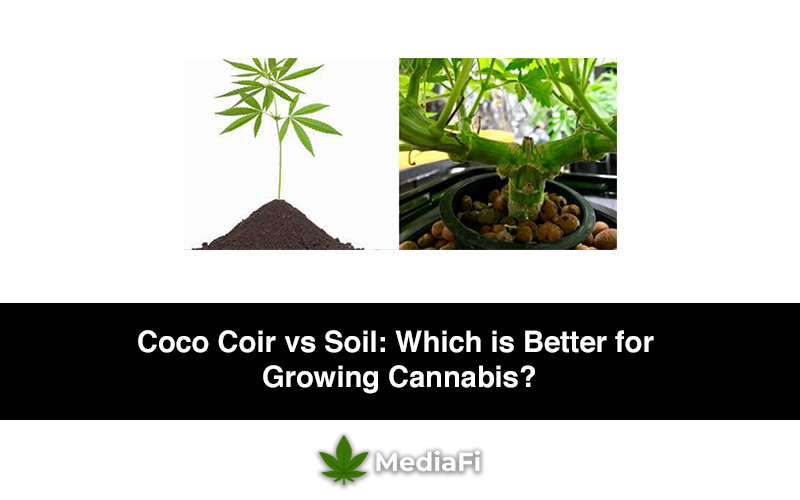 Coco Coir vs Soil