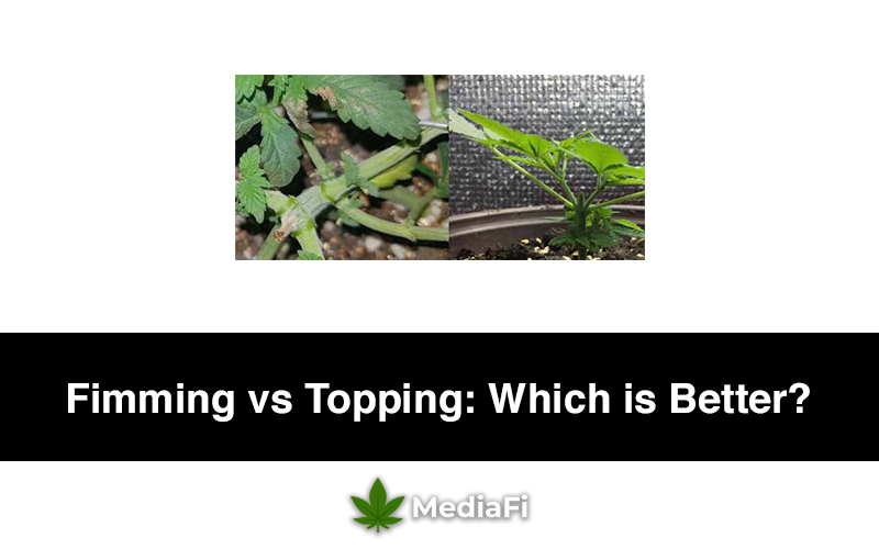Fimming vs Topping