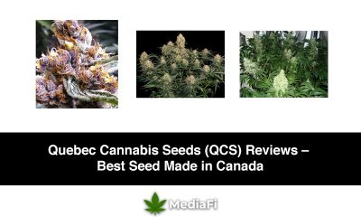 Quebec Cannabis Seeds (QCS) Reviews