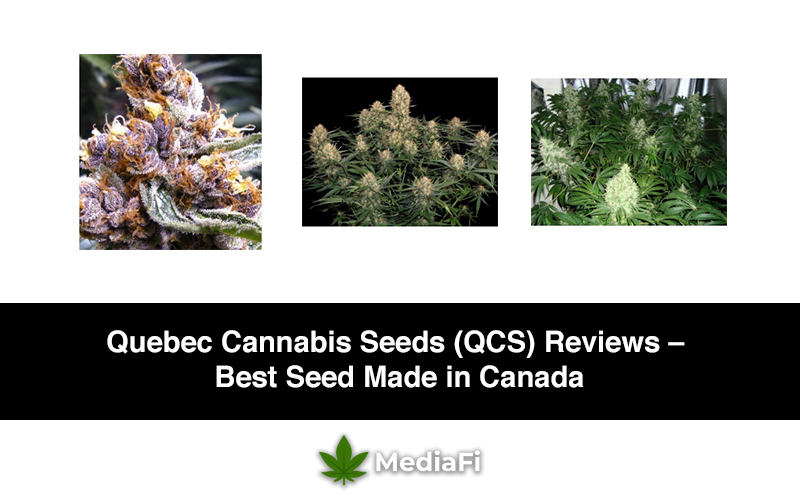 Quebec Cannabis Seeds (QCS) Reviews