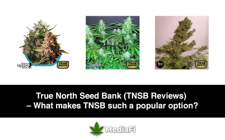 True North Seed Bank Review