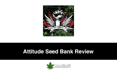 Attitude Seed Bank Review