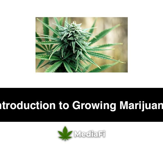 Introduction to Growing Marijuana