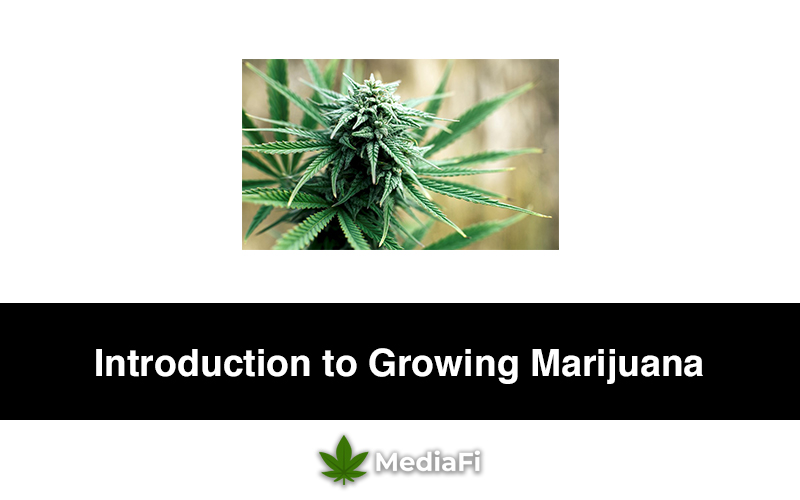 Introduction to Growing Marijuana