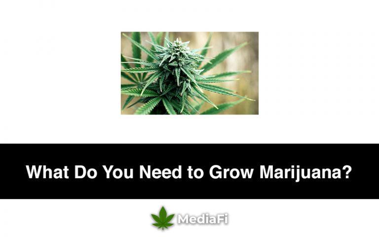 What Do You Need to Grow Marijuana
