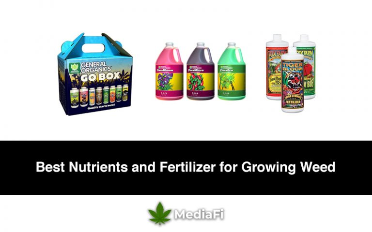 Best Nutrients and Fertilizer for Growing Weed