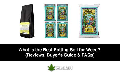 Best Potting Soil for Weed