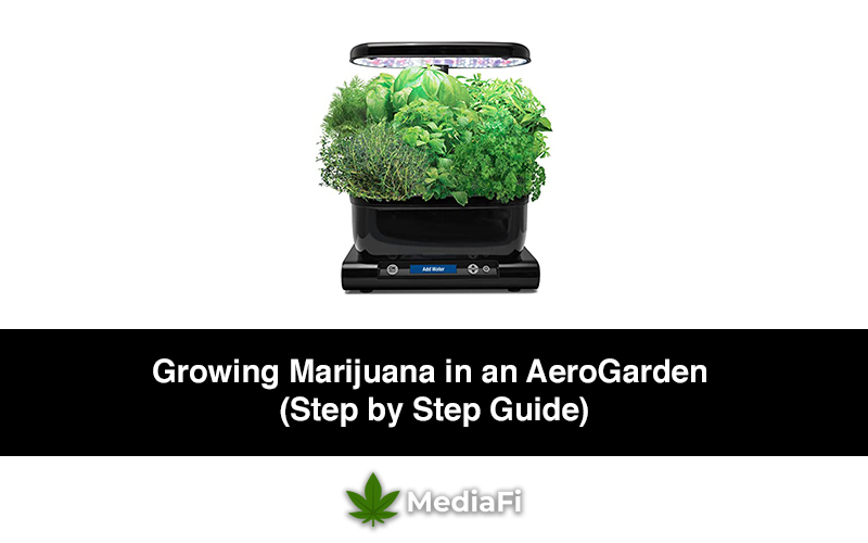 Growing Marijuana in an AeroGarden (Step by Step Guide)