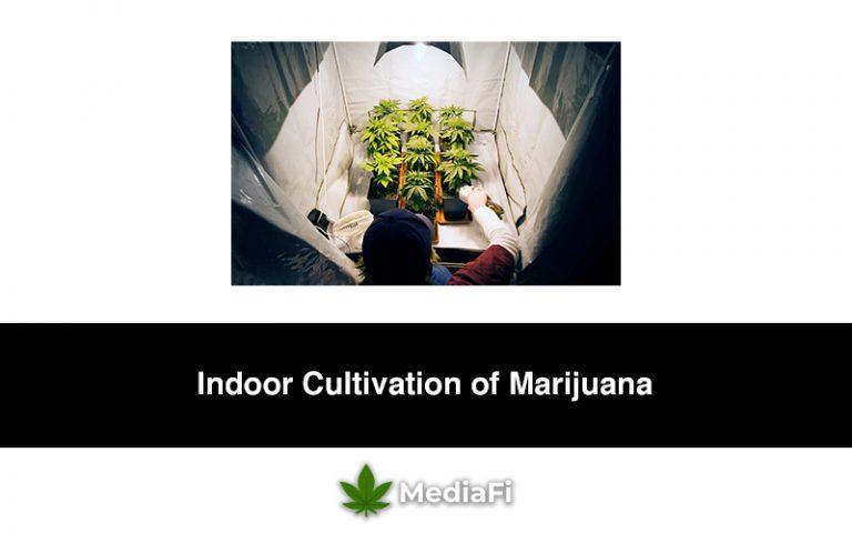 Indoor Cultivation of Marijuana