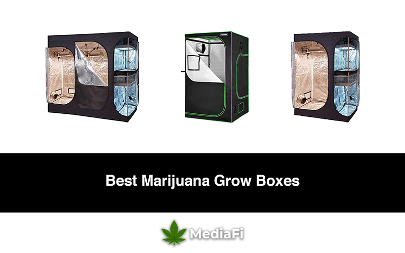 Best Marijuana Grow Boxes