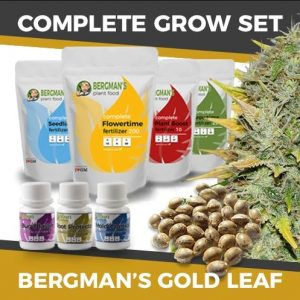 Gold Leaf Grow Kit