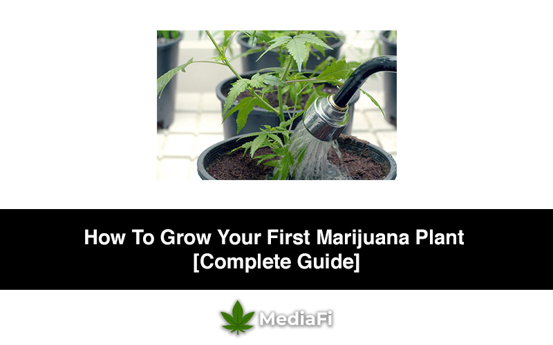 How To Grow Your First Marijuana Plant