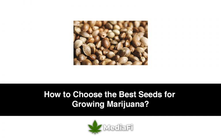 How to Choose the Best Seeds for Growing Marijuana