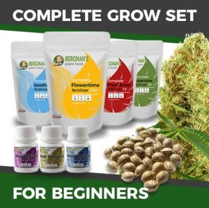Marijuana Grow Kit - Beginners