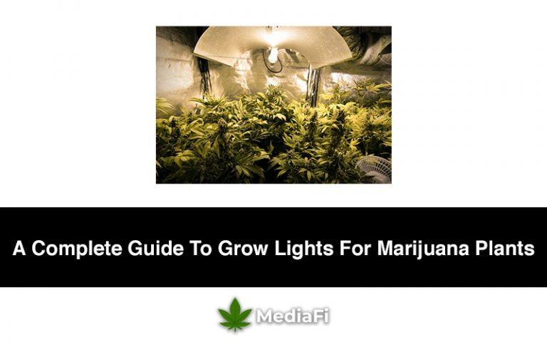 A Complete Guide To Grow Lights For Marijuana Plants
